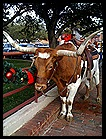 Stockyards4